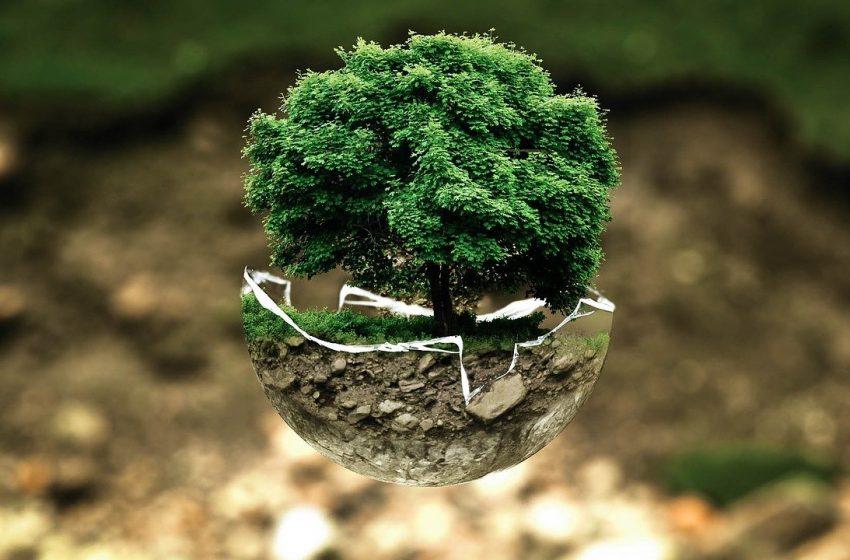 La educación ambiental será obligatoria en todas las escuelas